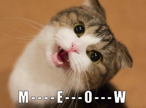 aa5a930ec14eaa49104b034192165e7a_-online-casino-cat-meows-cat-memes-meow_500-370